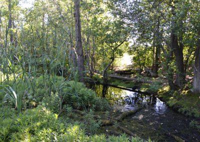 metsä isosaari vallisaari harakka vihreä blogi
